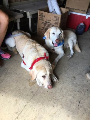 "Phew – that was a long day! The pups take a well-deserved break on the ride home. Red Cross is truly grateful that Christina and her ""kids"" were able to bring a bit of cheer to North Carolinian families in their time of need"
