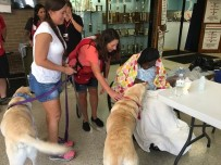 """The first stop Nathanial and Cooper make is to greet Dorothy Morris, an elderly woman staying at the shelter. """"I like those dogs,"""" she says. """"They are so big!"""""""